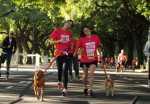 Eukanuba Dog Run 1