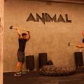 Animal Corssfit 1